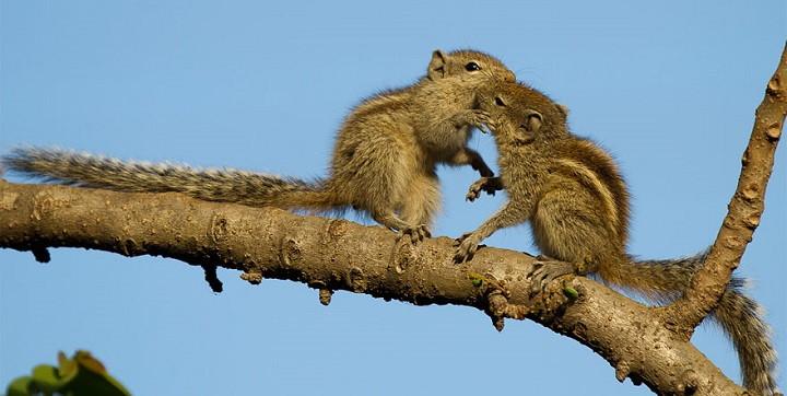 fotos animales besandose1