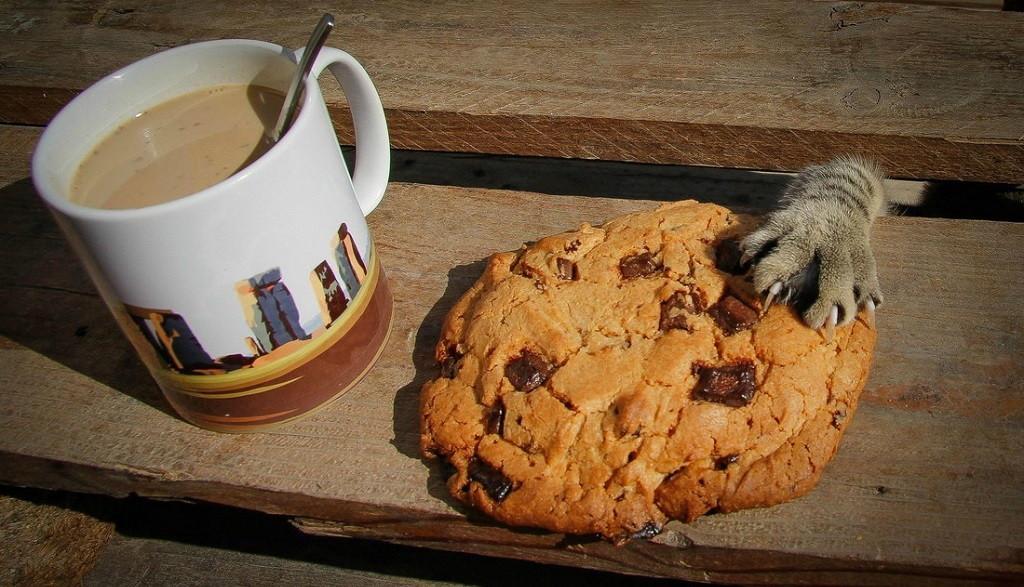 gato cogiendo una galleta