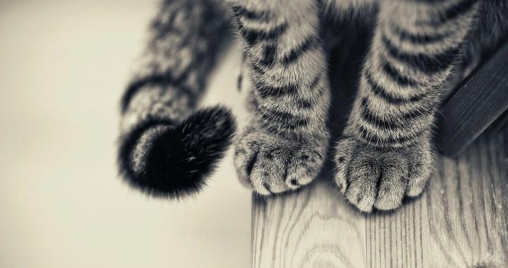 gatos que se muerden la cola