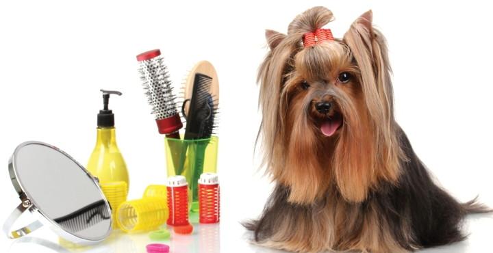 grooming.se