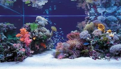 peces que no deberian estar en acuarios