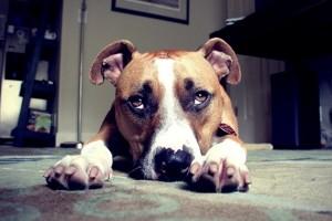 Divertida recopilación de perros culpables de trastadas
