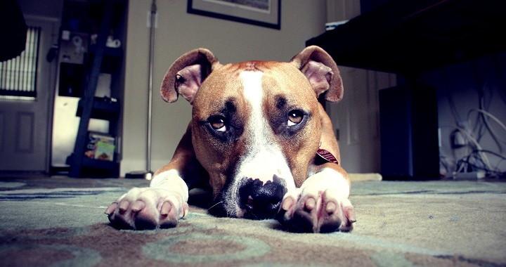 recopilacion perros culpables