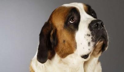 Como reacciones perros ladridos humanos