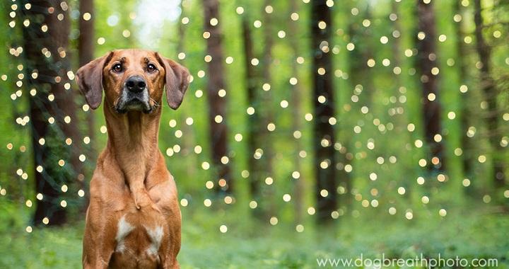 Kaylee Greer Dog Breath Photo