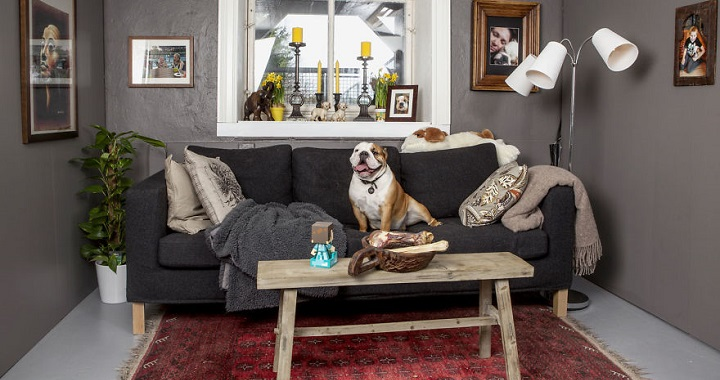 bonita historia de amor entre familia y perro