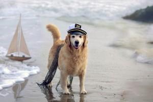 Consejos para llevar al perro a la playa