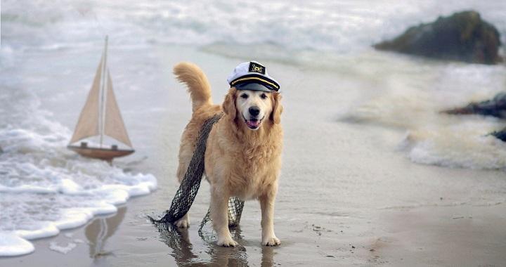 Resultado de imagen para perrito en la playa