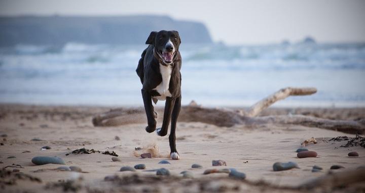 cuidar patas perros verano