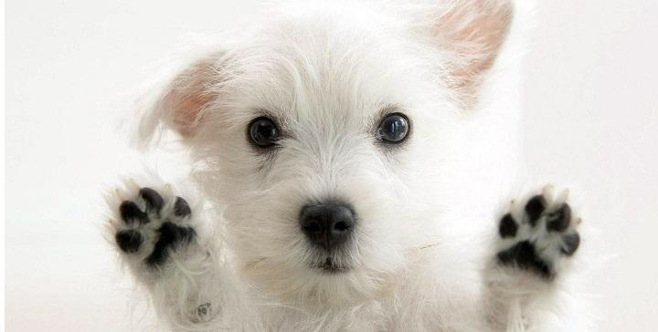 cuidar patas perros verano1