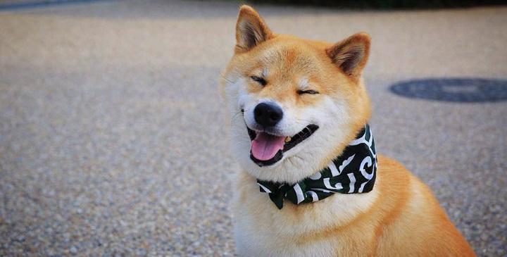 el perro mas feliz del mundo1