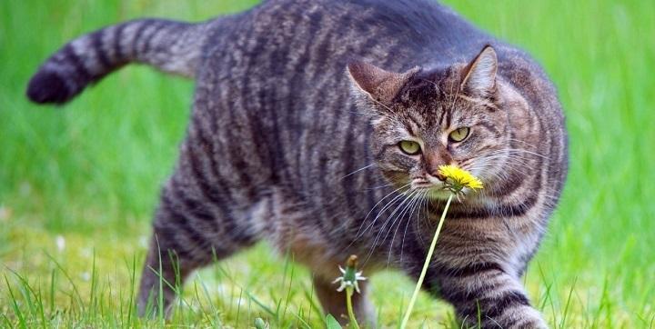 haz que el gato pierda peso