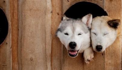 perritos graciosos 4