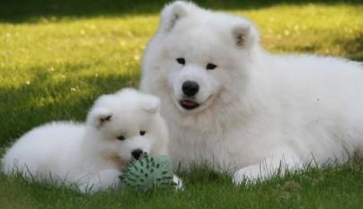 perritos graciosos 5