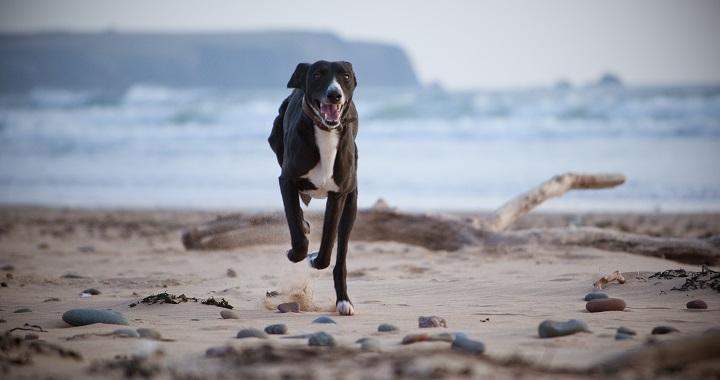 perros mucha energia