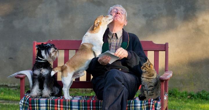 perros personas mayores