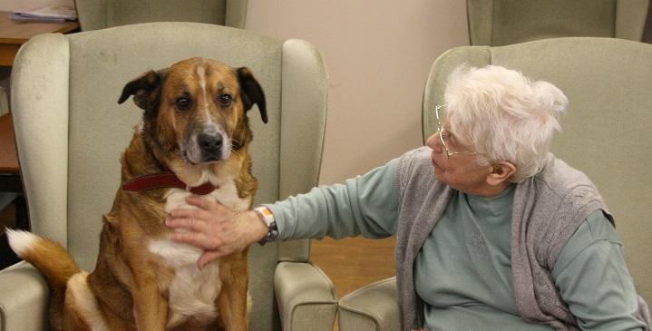 perros personas mayores1