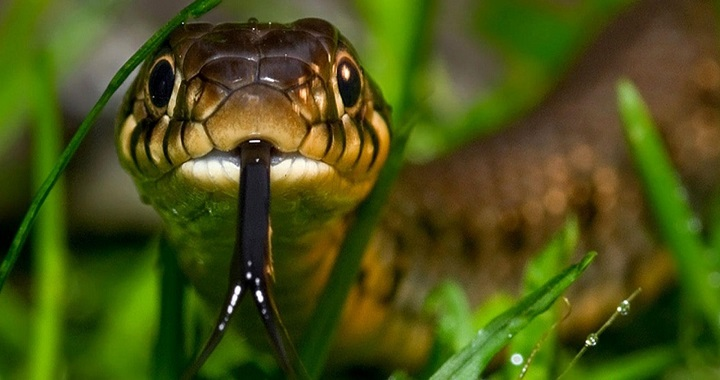 Como se mueven las serpientes