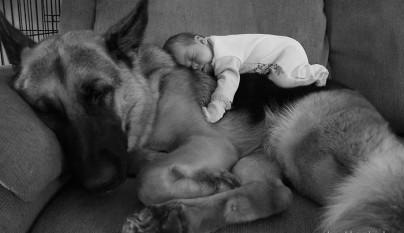 Fotos perros y bebes