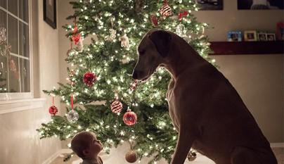 Fotos perros y bebes1