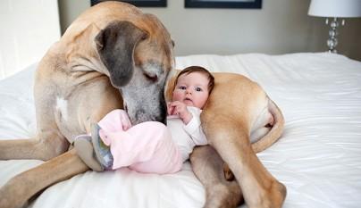 Fotos perros y bebes11
