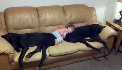 Fotos perros y bebes12