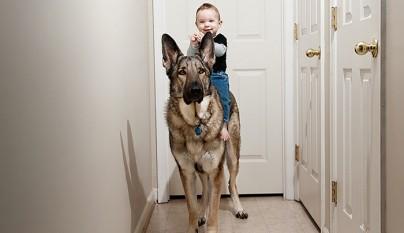 Fotos perros y bebes13