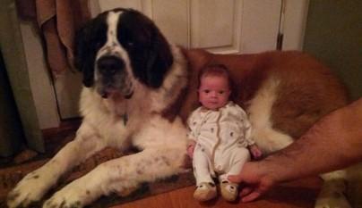 Fotos perros y bebes14