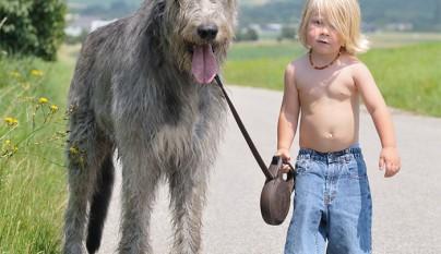 Fotos perros y bebes15