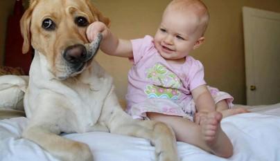 Fotos perros y bebes16