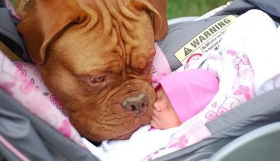 Fotos perros y bebes17
