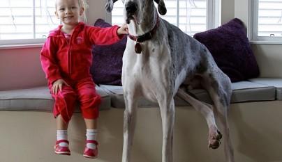 Fotos perros y bebes18