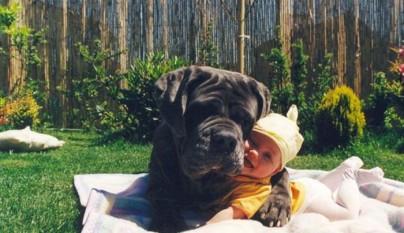Fotos perros y bebes19