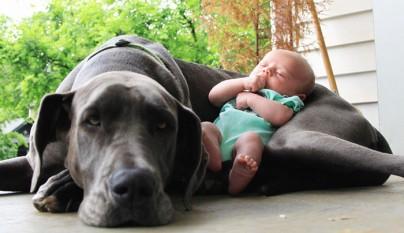 Fotos perros y bebes2