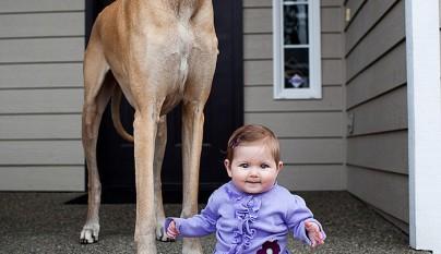 Fotos perros y bebes20