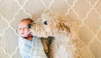 Fotos perros y bebes4