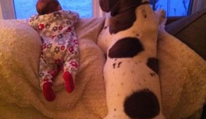 Fotos perros y bebes7