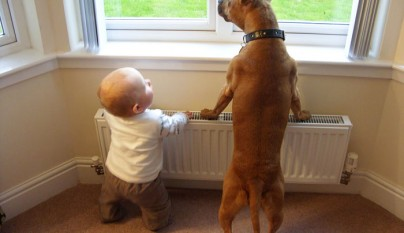 Fotos perros y bebes9