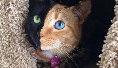 Gato con dos caras1