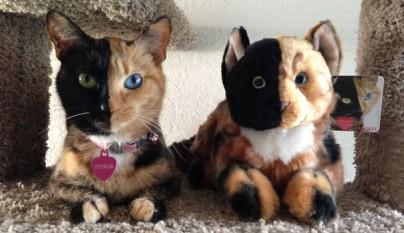 Gato con dos caras10