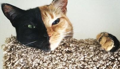 Gato con dos caras4