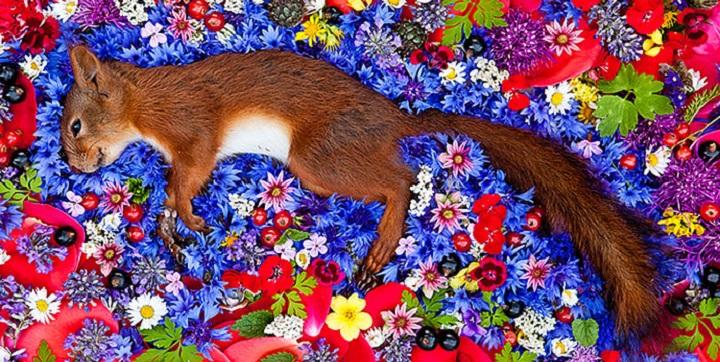 Homenaje animales muertos1