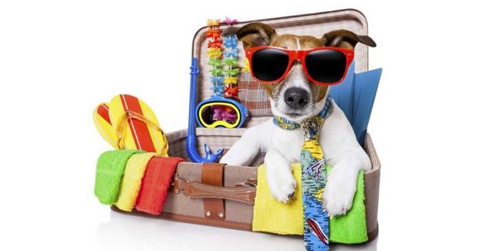 Verano: la maleta de nuestro perro