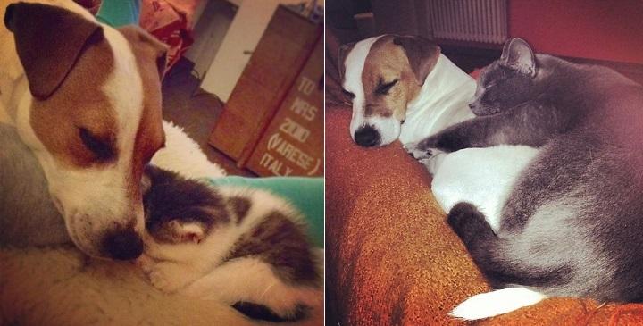 Peppo y los gatos1