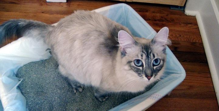 limpieza caja arena gatos1