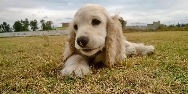 nueva ley mascotas1