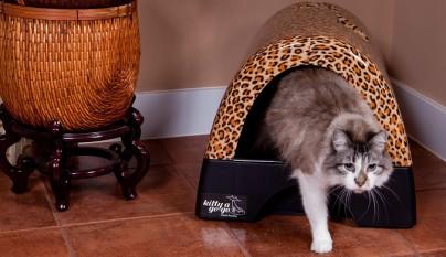 olor caja de arena gato