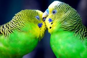 Las mejores aves para el hogar