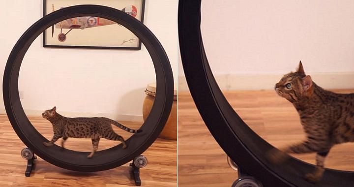 rueda para gatos