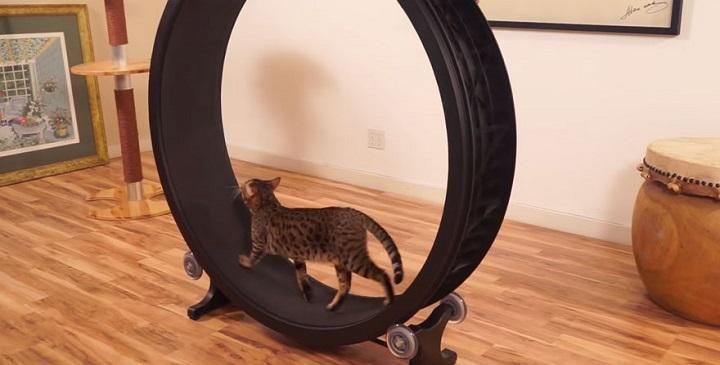 rueda para gatos1